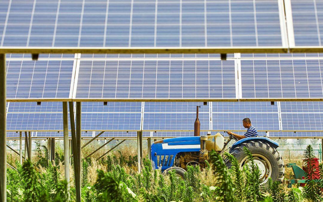 Termőföld: gabona vagy áram teremjen?