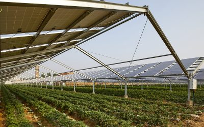 EU to give key role to solar parks in its new Biodiversity and Farm to Fork Strategy