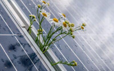 Széles iparági összefogással készül útmutató a természetbarát napelemparkok létesítéséhez